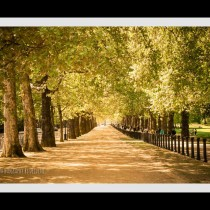 Hyde Park Stroll