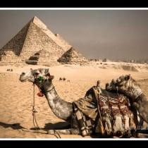 Camel Stop