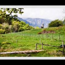 Glendalough Sanctuary